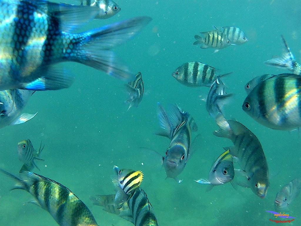 family trip pulau pari 140716 GoPro 46