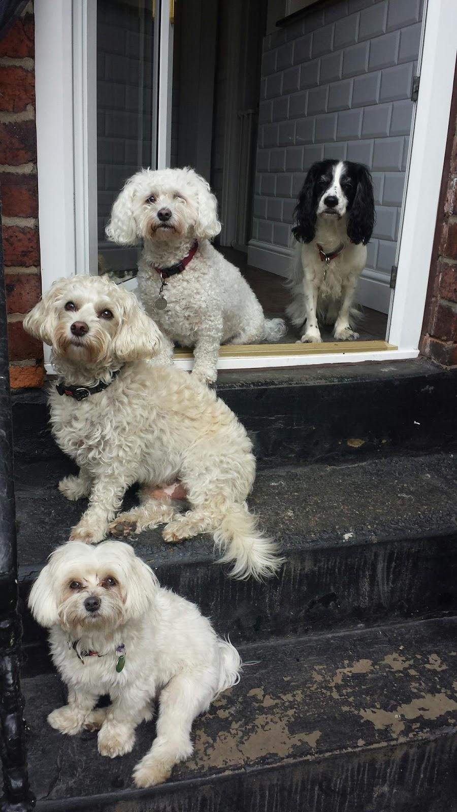 Small Dogs Boarding Kennels