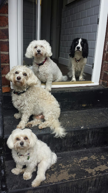 Dog Home Boarding Rotherham