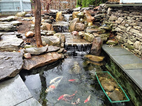 Photo: #PondServices Pond Maintenance Monroe County Rochester NY byAcorn Ponds & Waterfalls, Certified Aquascape Contractor since 2004.  Check out our website www.acornponds.com and give us a call 585.442.6373.  Another #FishPond cleaned and ready for summer enjoyment. We added the waterfall a few years ago to this pond. Contact us now to get on our spring pond clean out schedule! Space is limited.  We can help you with any pond problems you might have. To learn more about our Pond Maintenance Services please click here: www.acornponds.com/pond-maintenance.html  Contact us today at 585-442-6373 or click here: www.acornponds.com/contact-us.html  Click here for a free Magazine all about Ponds and Water Features: http://flip.it/gsrNN  Click here for more information about our ecosystem ponds: www.facebook.com/notes/acorn-landscaping-landscape-designlightingbackyard-water-gardens/acorn-landscaping-designs-installs-aquascape-ecosystem-water-garden-fish-ponds-i/464917560212038  Acorn Ponds & Waterfalls  585.442.6373 www.acornponds.com