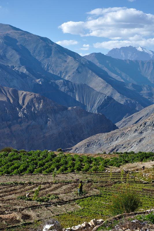 Terenurile cultivate din jurului satului Nako. La fel ca in Pamir acolo unde exista o sursa de apa si un teren cat de cat roditor poti face cu foarte multa munca desertul sa inverzeasca.