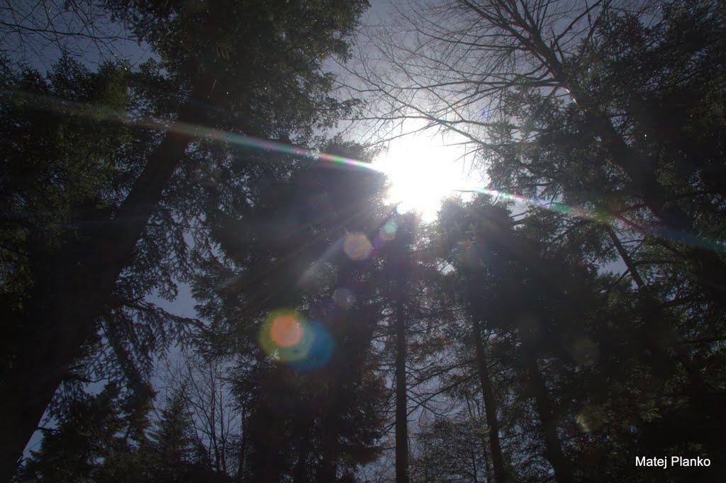 Potem pa po gozdu med kukajočimi sončnimi žarki proti vrhu