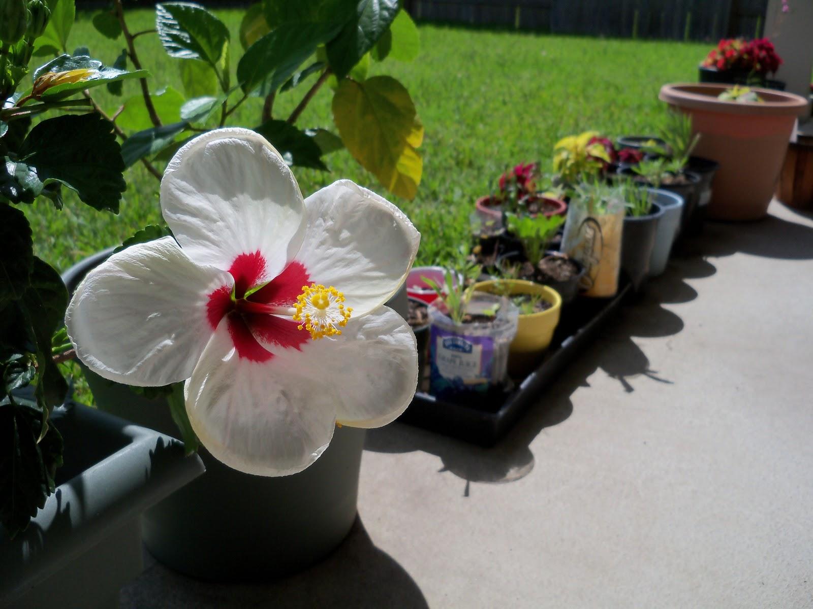 Gardening 2010, Part Three - 101_3880.JPG