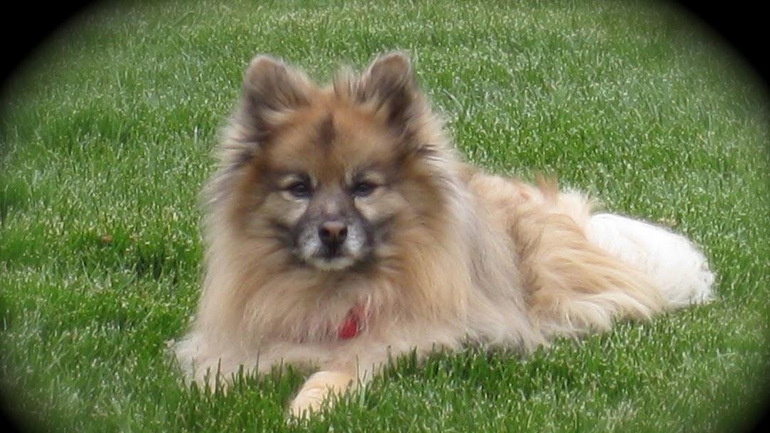 Randolph County Humane Society Sparta, IL - Animal Shelter
