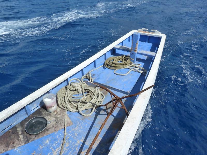 Dauin, Dumaguete, APO Island (Negros) - philippines%2Bdeux%2B683.JPG