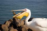 Pelican - Swakopmund, Namibia
