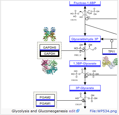 (Figure 3.) Glycolysis and Glyconeogenesis