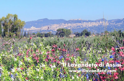 Progetti giardini online gratis progetti giardini privati for Foto giardini fioriti