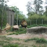 Zoo Snooze 2015 - IMG_7194.JPG