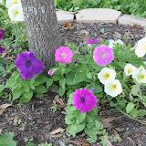 Gardening 2012 - IMG_2854.JPG