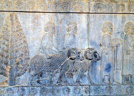 Widder, Persepolis