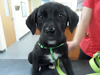 Leia-Keefe-dog-veterinarian-east-hampstead-nh.jpg