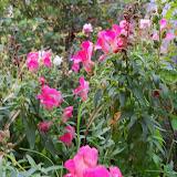 Gardening 2012 - 115_2140.JPG