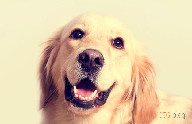 Hướng dẫn điều trị một số bệnh thường gặp ở chó mèo tại nhà