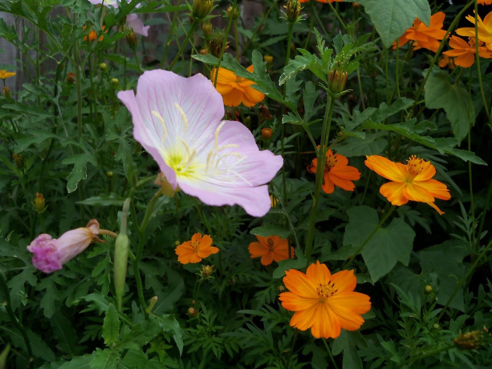 Gardening 2013 - 115_5983.JPG