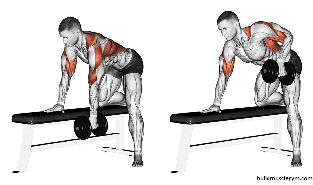 The Dumbbell Row:Guide,Form,Flaws,Set Up & Execution