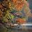 June Chee's profile photo
