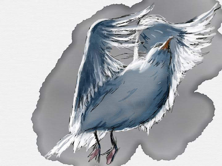 gull made with Sketches