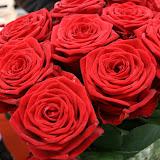 RosesDeSantJordi