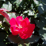 Gardening 2011 - 100_9164.JPG