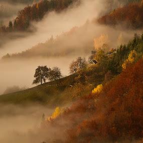 autumn colors on Jamnik by Bor Rojnik - Landscapes Mountains & Hills ( hills, foggy, mountain, fog, color, autumn, slovenia, beautiful, jamnik,  )