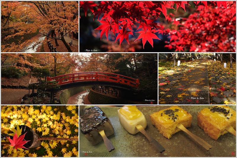 京都 行程 鹿王院 北野天滿宮 楓