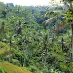 0496_Indonesien_Limberg.JPG