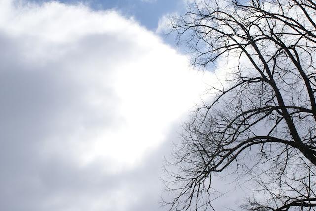 Zajęcia terenowe 29 lutego 2012 - DSC06166_1.JPG