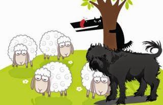 Los lobos, los carneros y el carnero padre