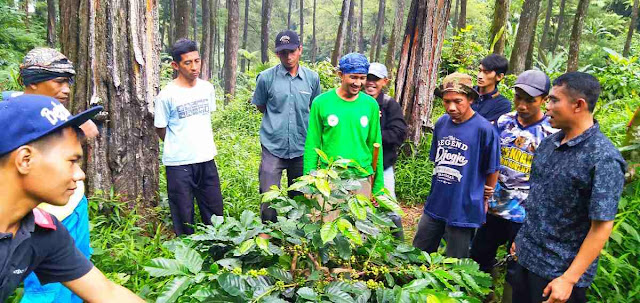Haji Aleh, petani kopi terbaik Indonesia latih petani Desa Pusakamulya