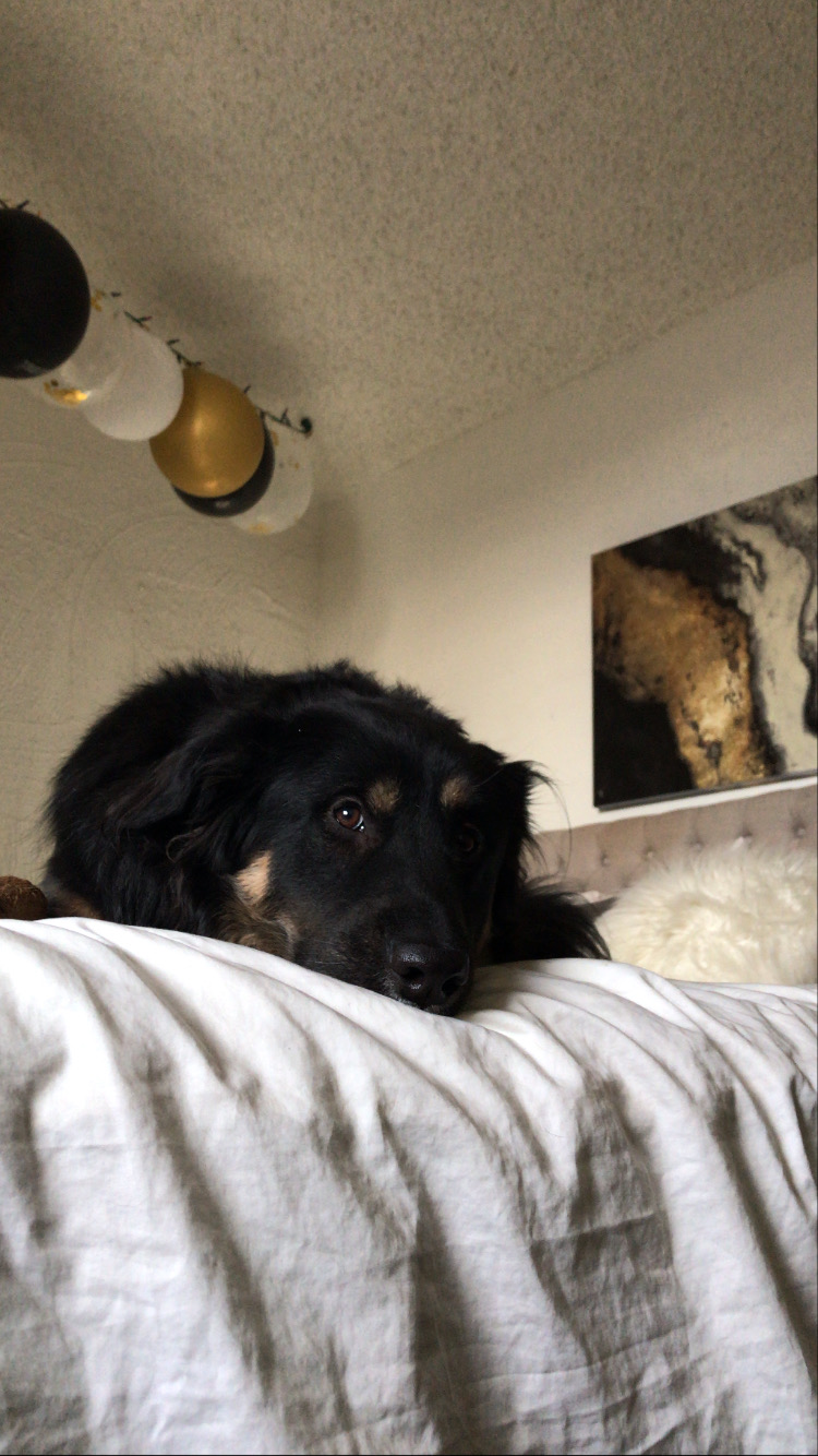 Dog laying on the end of the bed looking at the camera