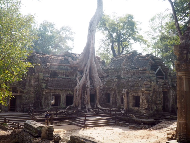 Tree growing out the ruins of Ta Prohm temple, Angkor park, Cambodia