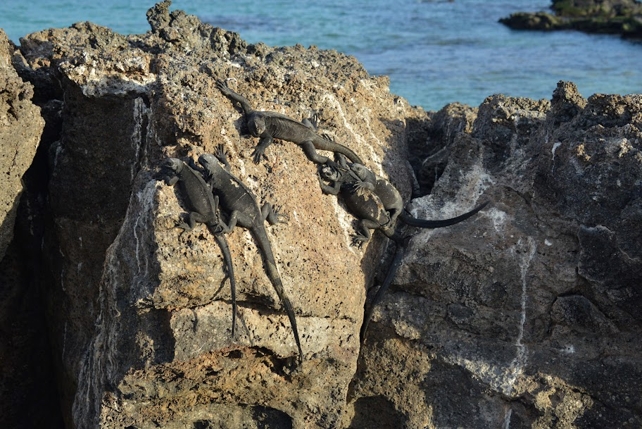galapagos - Galapagos_FB_2-87.jpg