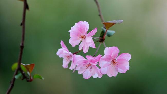 Bông hoa dại