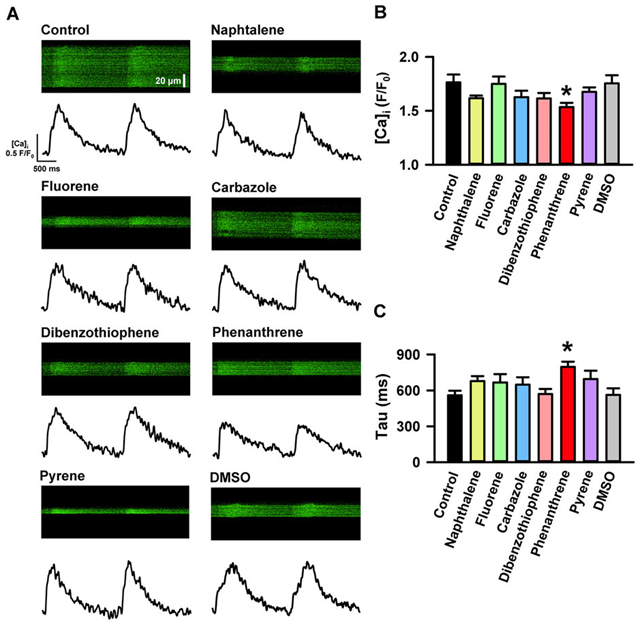(A) Spatial and temporal Ca2+ flux in ventricular cardiomyocytes from Pacific mackerel incubated for >30 min with phenanthrene (5 μM), fluorene (5 μM), dibenzothiophene (5 μM), carbazole (5 μM), naphthalene (5 μM), pyrene (5 μM), a DMSO control (1/1000) or untreated (control). Chemical formulae for each moiety are given in Supplementary Fig. S1. Shown here are representative raw confocal transverse line scans across the width of single myocytes loaded with the AM form of the calcium-sensitive dye (Fluo-4) (top) and the corresponding Ca2+ transient to indicate the inhibitory effects of individual PAHs on the temporal and spatial characteristics of Ca2+ dynamics (bottom). (B) Reduction in the mean amplitude of the Ca2+ transients expressed as peak fluorescence divided by baseline fluorescence (F/F0). (C) Increase in the time constant of Ca2+ transients decay (tau, time to decay to 37% of its peak). Data are means ± SEM of control (n = 39, N = 10), phenanthrene (n = 42, N = 4), fluorene (n = 21, N = 2), dibenzothiophene (n = 25, N = 3), carbazole (n = 21, N = 2), naphthalene (n = 28, N = 4), pyrene (n = 23, N = 2) and DMSO (n = 22, N = 5). Graphic: Brette, et al., 2017 / Nature Scientific Reports