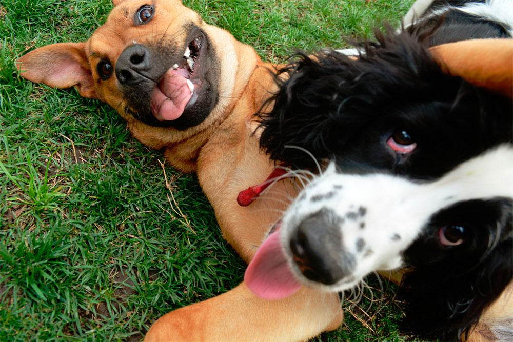 Hablemos del ABC canino