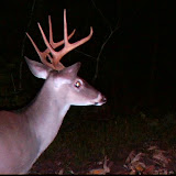 13 Oct 20008 - Stealth Cam pics @ Anderson Creek Hunting Preserve.