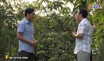 Phim Con Gái Chị Hằng Tập 14
