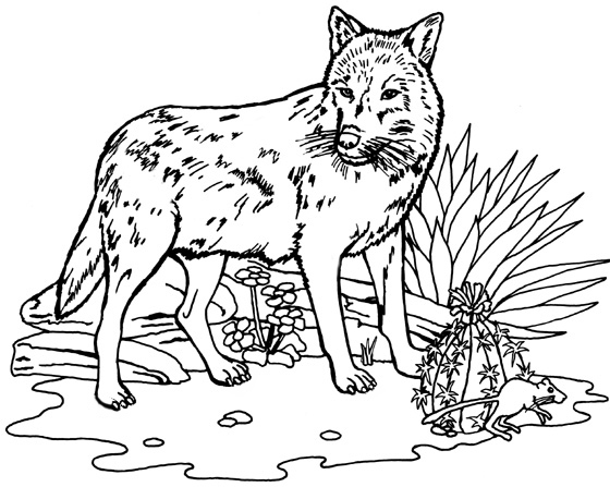Geography blog mexican gray wolf coloring page for Grey wolf coloring pages