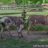 05-11-12 Wildlife Prairie State Park IL - IMGP1611.JPG