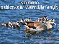 buongiorno buon giorno immagine con frase aforismo a chi crede nel valore della famiglia anatre papere.jpg