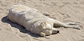 Sizilien - Hund sonnt sich am Strand von Mondello.