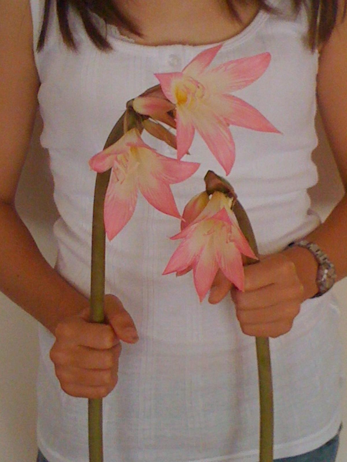 Alessandra Zecchini Pink Flowers Underwater Gardening Kiwi berries