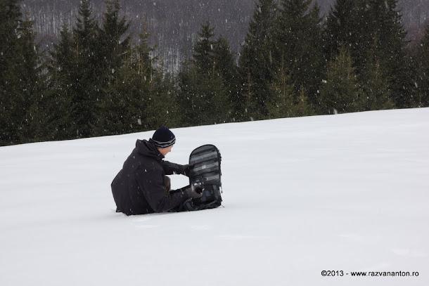 Foto in ninsoare