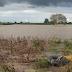 बळीराजाच्या डोळ्यात पाणी; शेतीपिके,  फळभाज्या, द्राक्ष बागांचे कोट्यवधींचे नुकसान