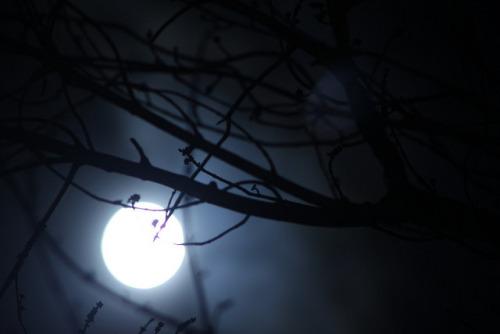 Chùm thơ xướng họa Đêm Đông Phố Nhỏ