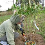 Hammo Planting - Shannon Schiesser - IMG_4913.JPG
