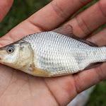 20160706_Fishing_Grushvytsia_016.jpg