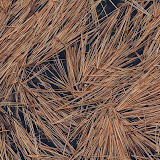 White-Pine-needles-frozen-in-ice_MG_2731-copy.jpg