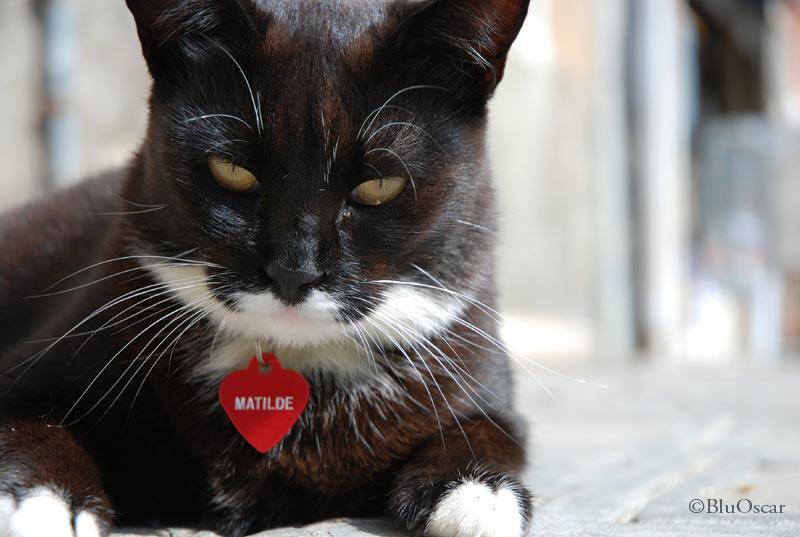 Gatti veneziani 26 09 2010 N 1